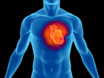 More Sex Equals A Healthier Heart